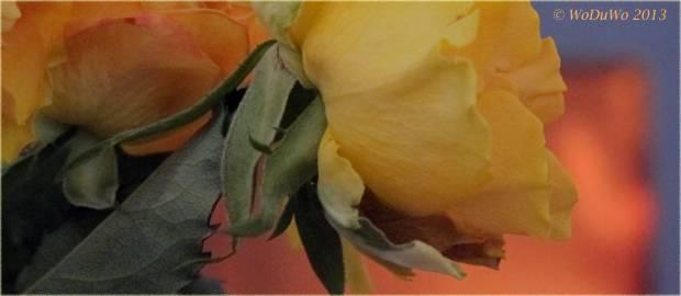 IMG_0171-Kamin-Rose-varWeb